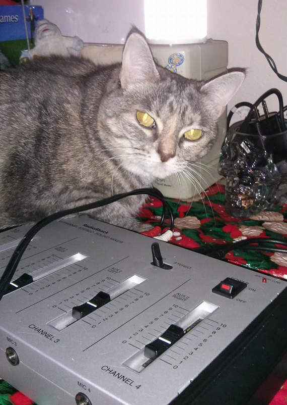 A kitten on top of some radio equipment.